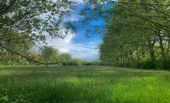 Naturschutzgebiet Urdenbacher Kämpe