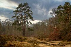 Naturschutzgebiet Wittenbergen in Hamburg an der Elbe ...