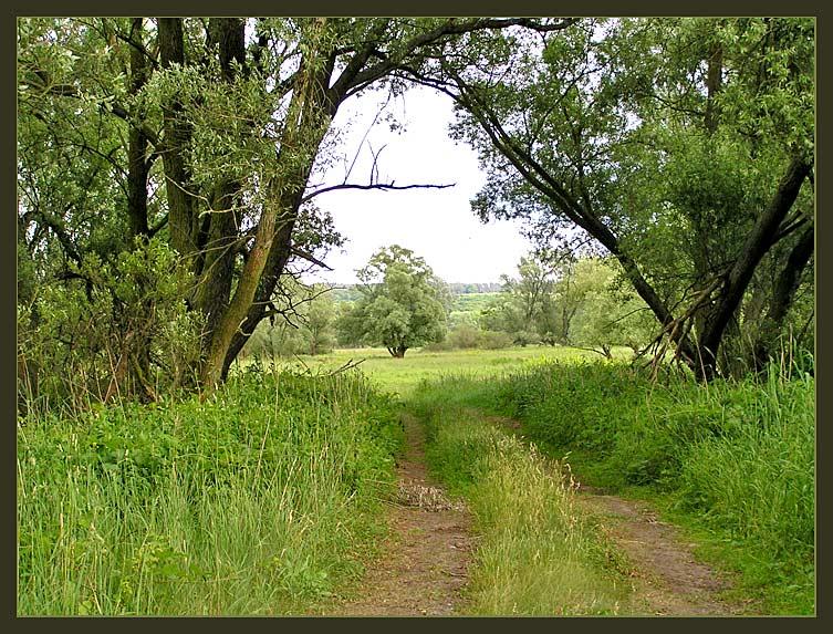 """Naturschutzpark """"Unteres Odertal"""""""