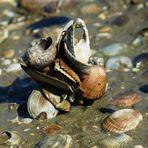 Naturskulptur am Strand aus Muscheln