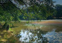 Naturspiegelung im Wildpark Isselburg