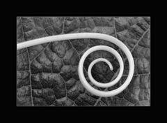 """Naturspirale"""