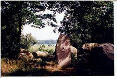 Natur,Steinschlagweg in Feldberg