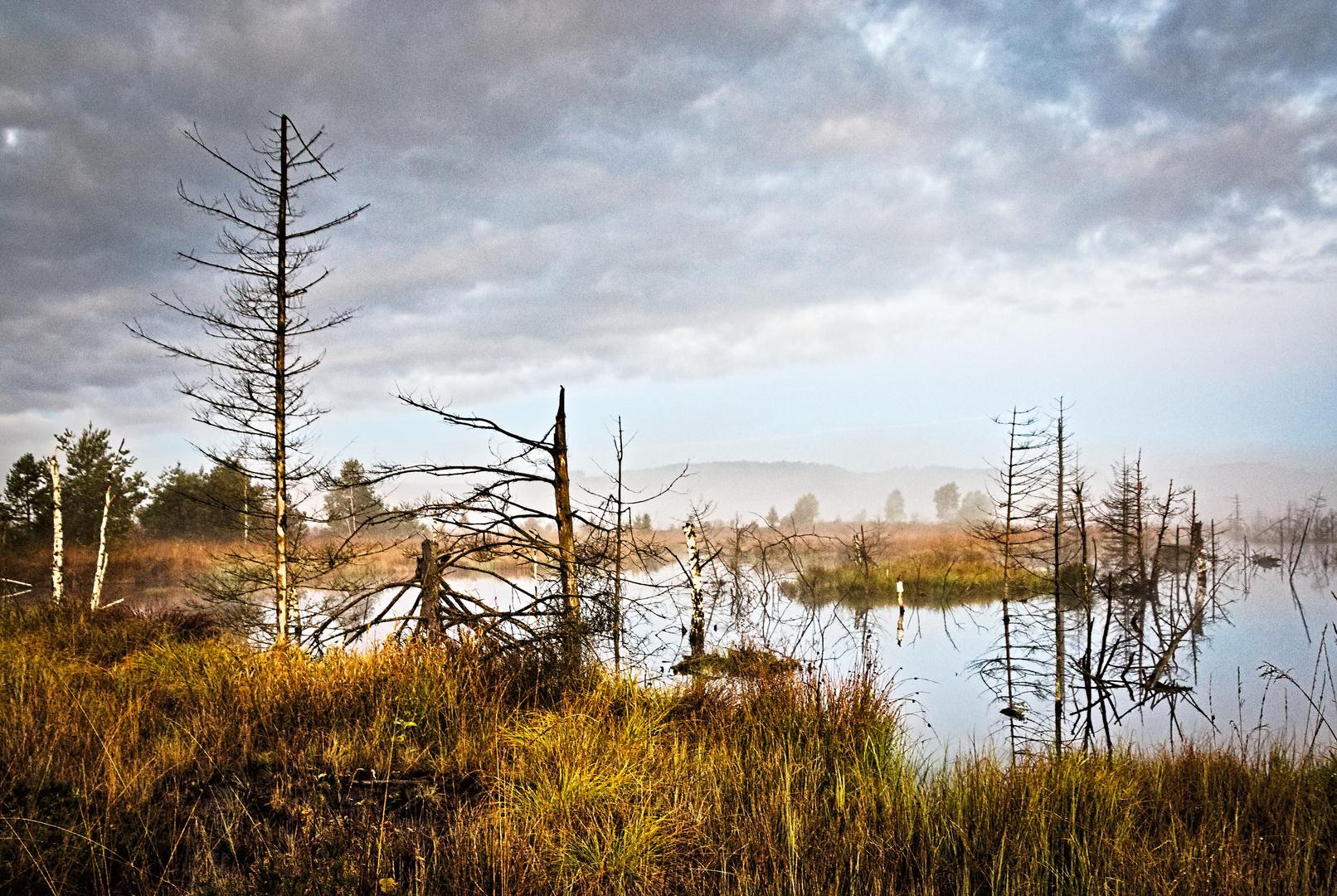 Naturstimmung morgens am Wurzacher Ried