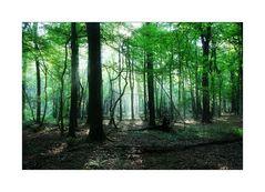 < Naturwaldzelle in Lintorf >