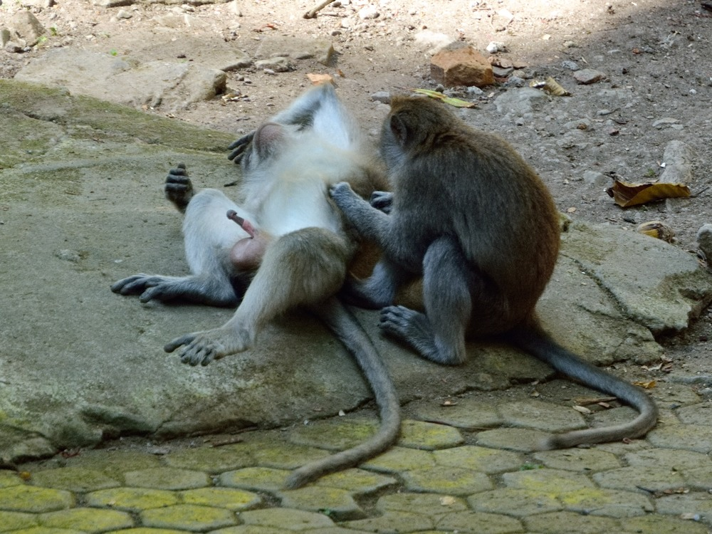 Naughty Monkey-Forest