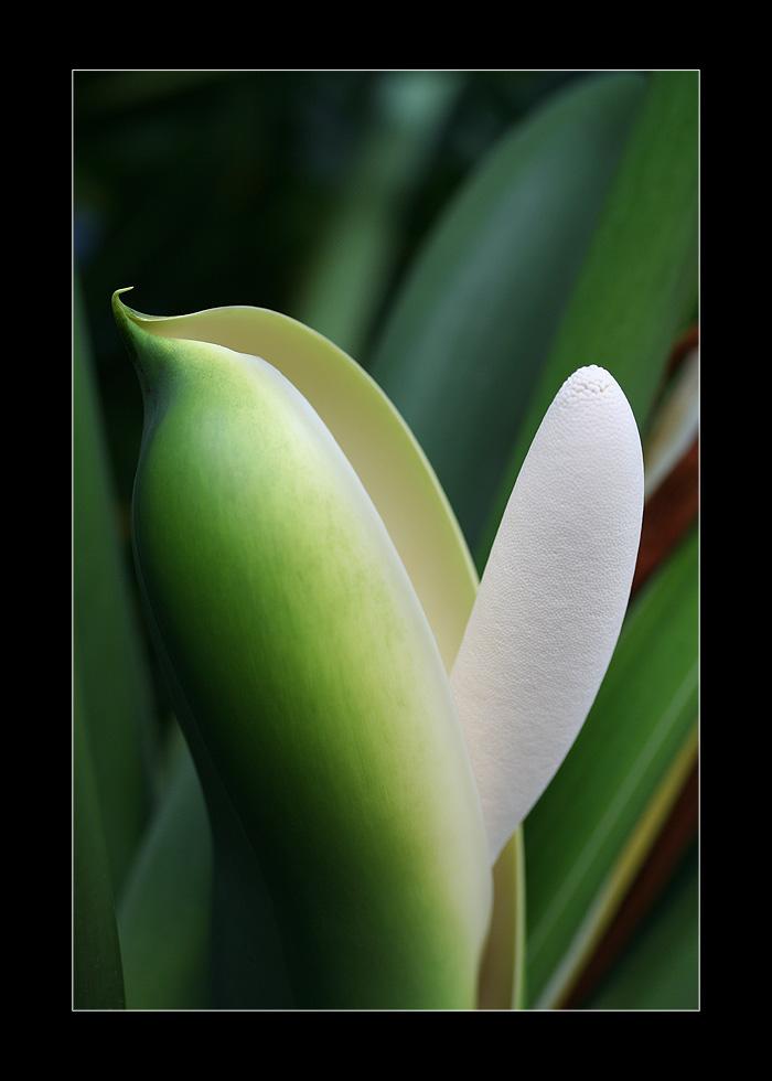 Naughty plant...