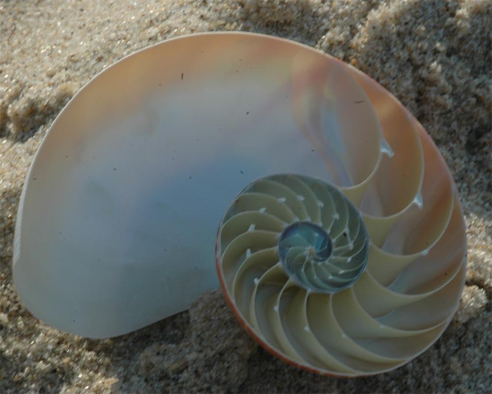Nautilus at Head of the Meadow Beach, Truro (Cape Cod), MA
