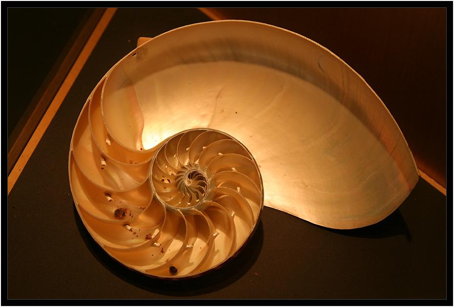 Nautilus....