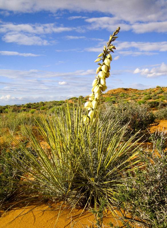 Navajo Land...