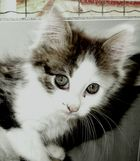 ne craquez pas , sur cet adorable chaton