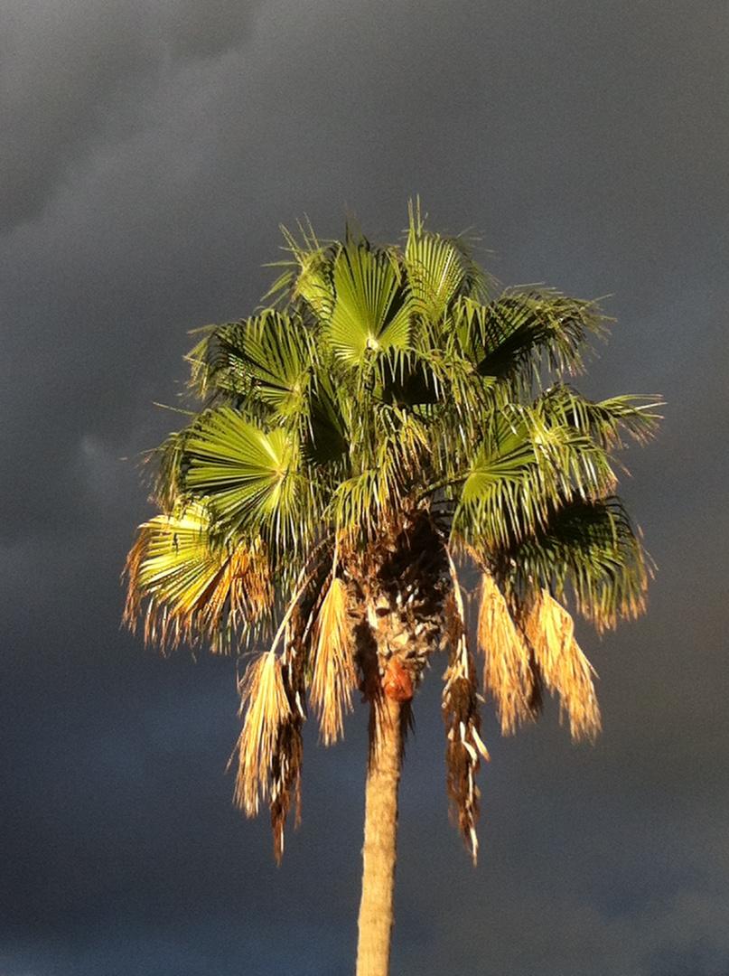 ne Palme ins rechte Licht gerückt ...