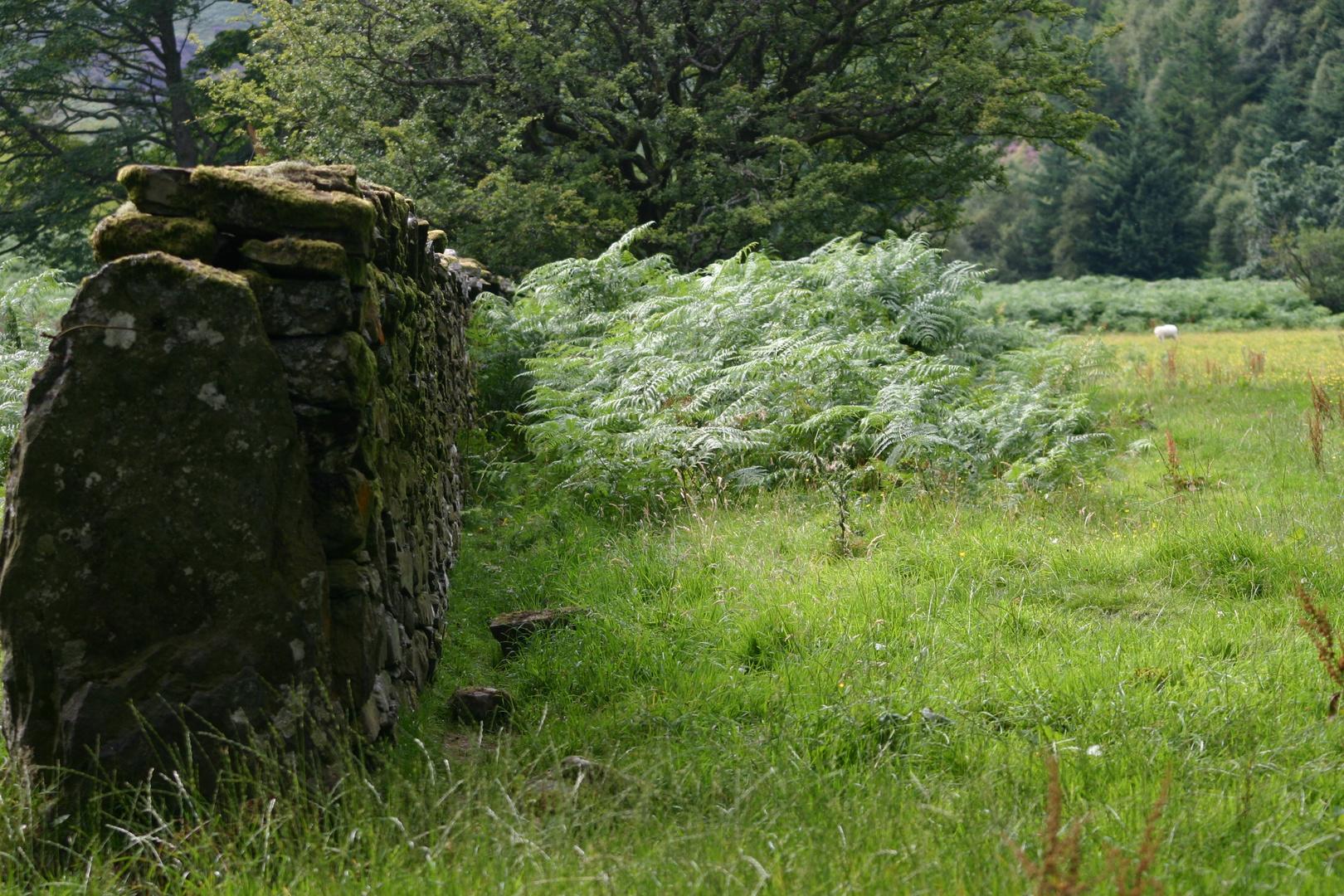 Near lake Vyrnwy/Wales