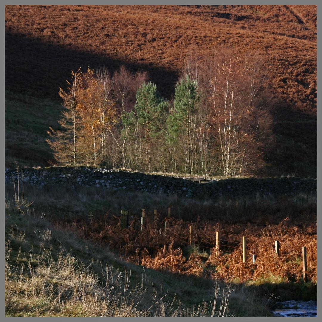 near Shillmoor Northumberland november