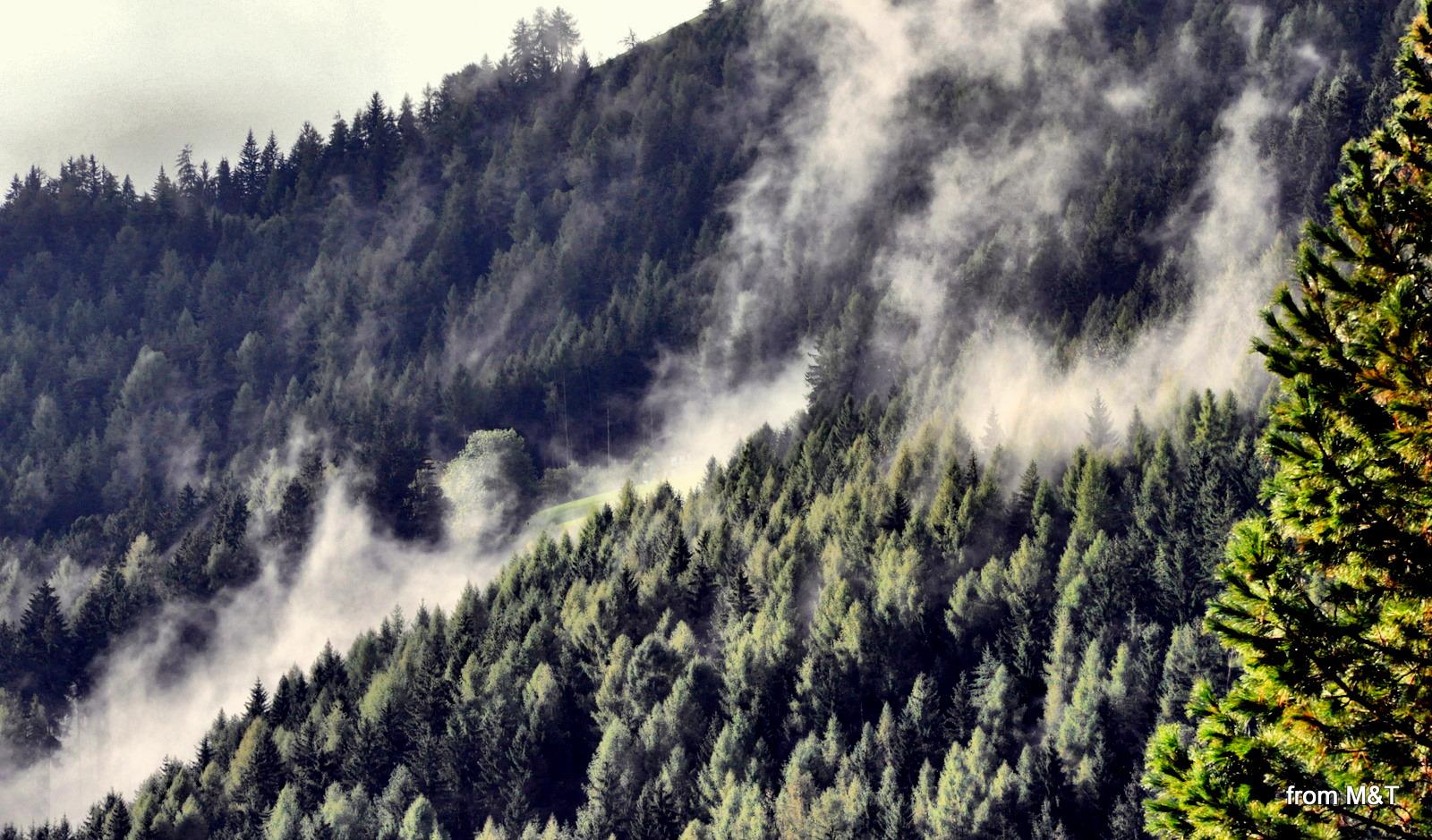 Nebbia a Casteldarne (Chienes)
