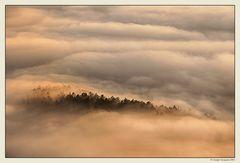 Nebbia e luce (3)