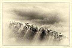Nebbia e luce (5)
