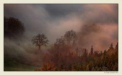 Nebbia e luce (6)
