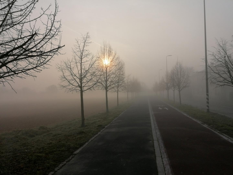 Nebbia mattutina
