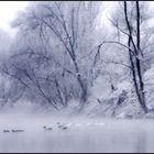 Nebbia mattutina lungo il fiume Po