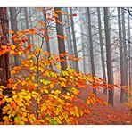 Nebbie d'autunno 3