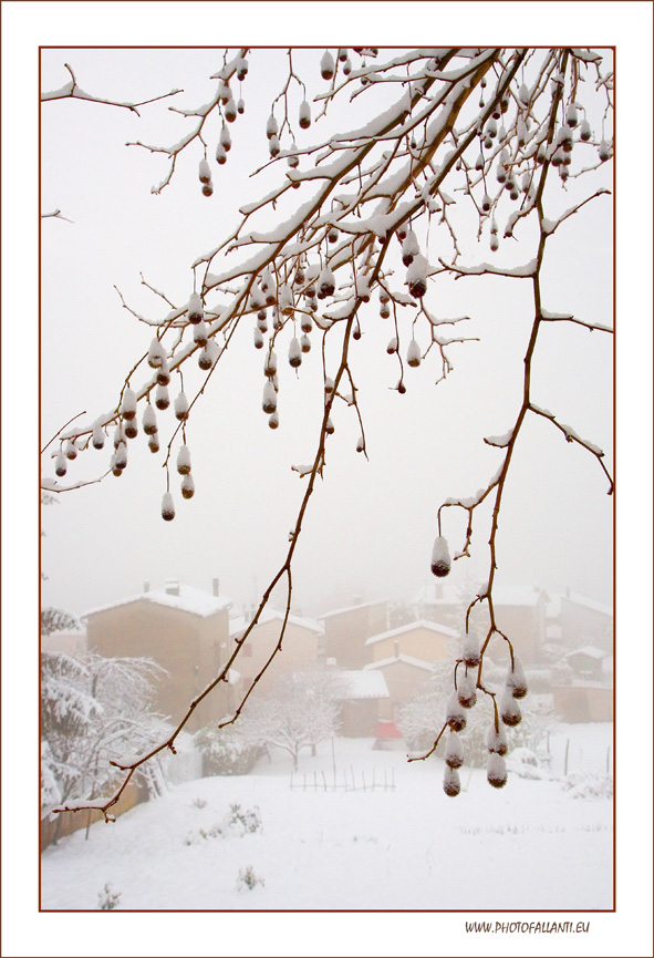 Nebbie d'inverno