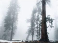 Nebel ....