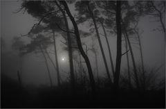 Nebel ...