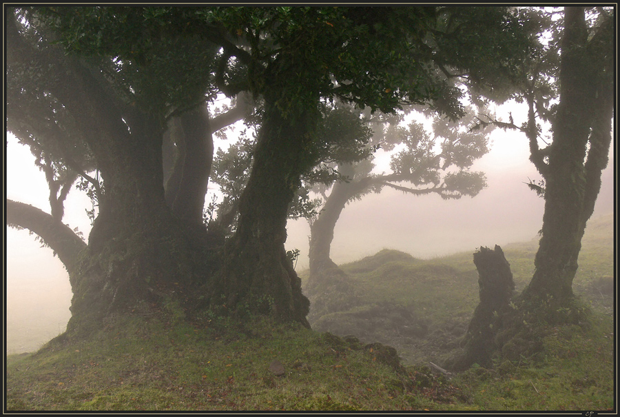 Nebel...