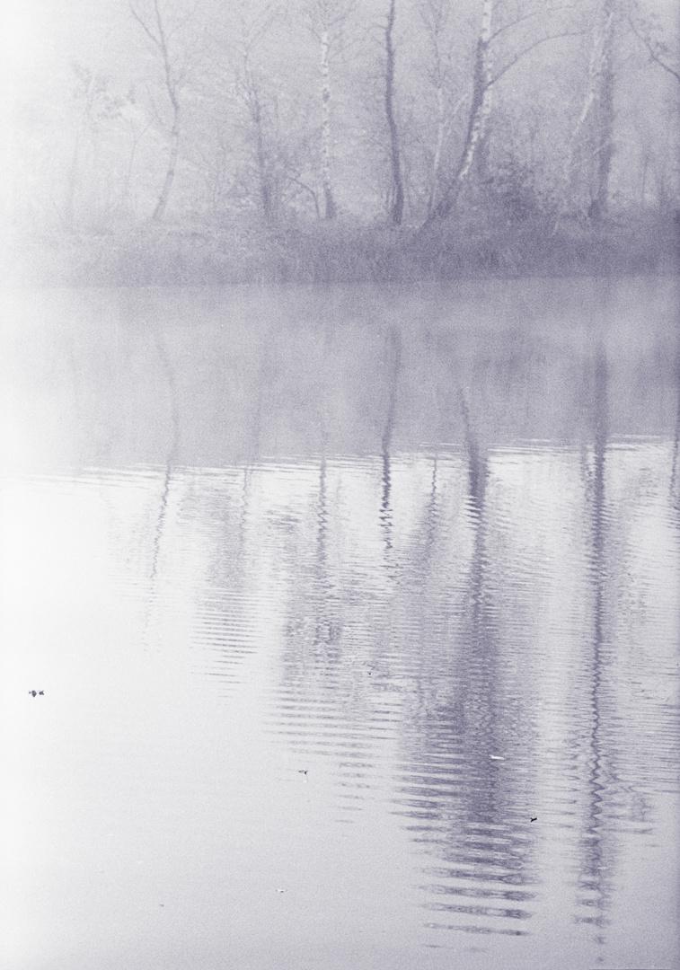 Nebel am Altrhein
