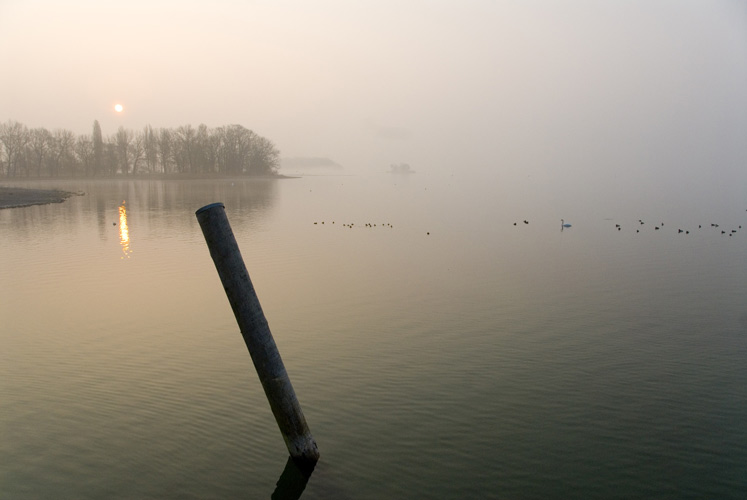 Nebel am Bodensee