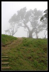 Nebel am Fanal