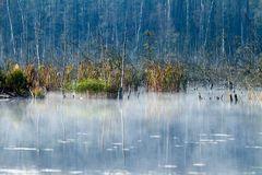 Nebel am faulen See