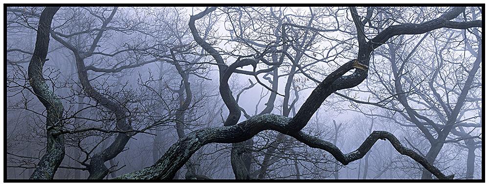 Nebel am Hexentanzplatz