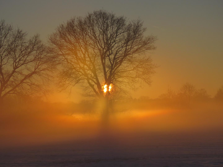 Nebel am Morgen...