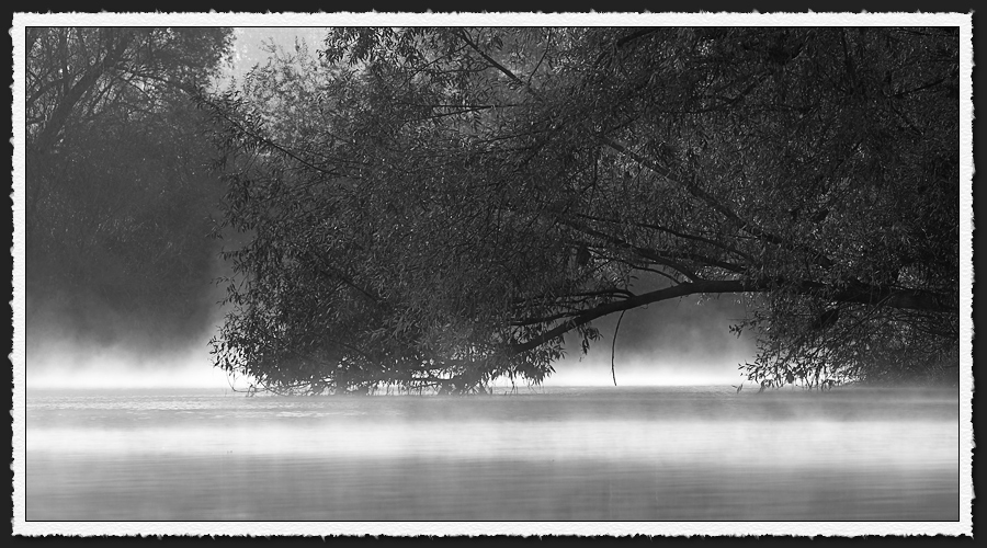 Nebel am Neckar
