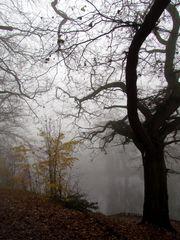 Nebel am Pfefferteich in Salzwedel