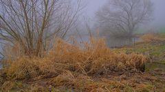 Nebel am See (niebla en el lago)