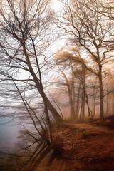 Nebel am Ufer