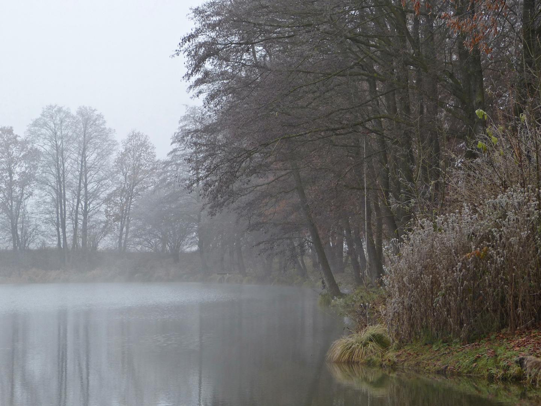 Nebel am Weiher...