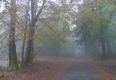Nebel an der Lausche