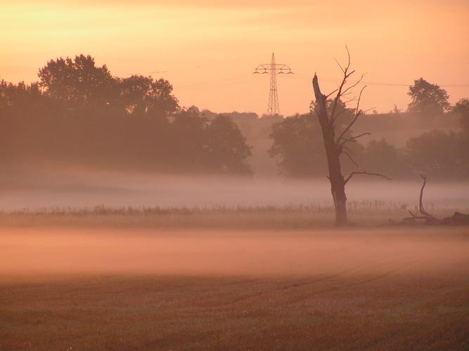 Nebel an der Saale