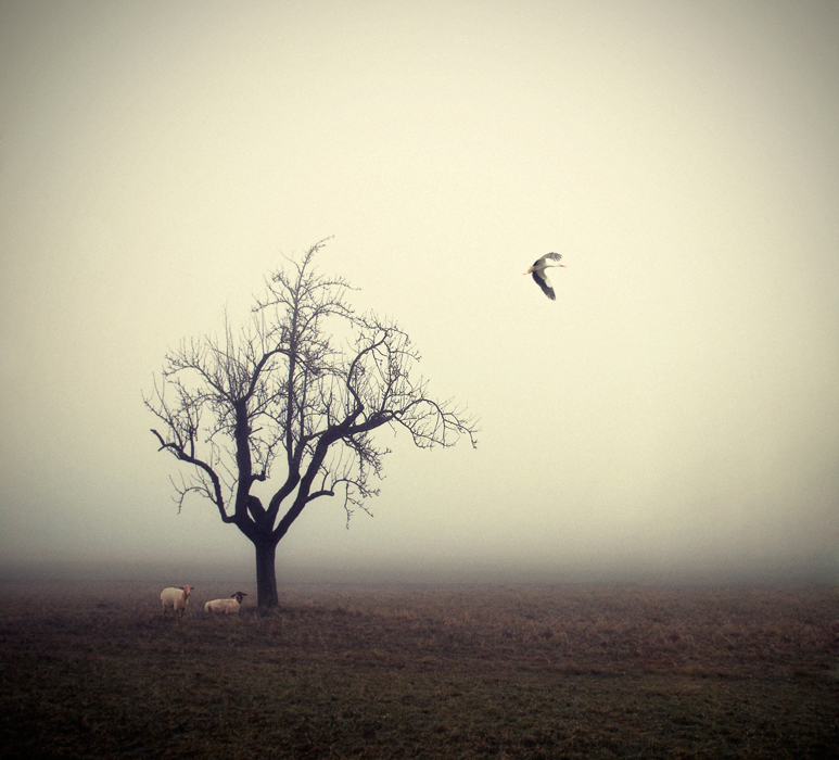 Nebel auf dem Feld