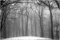 Nebel auf dem Gipfel des Weyerbergs