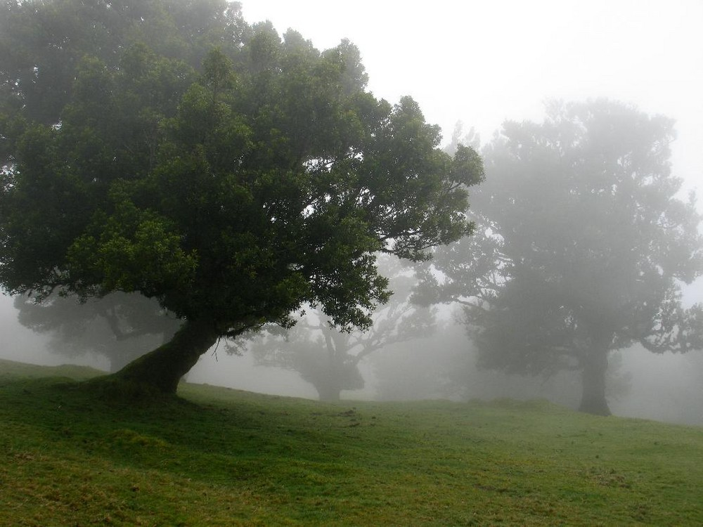 Nebel auf Madeira