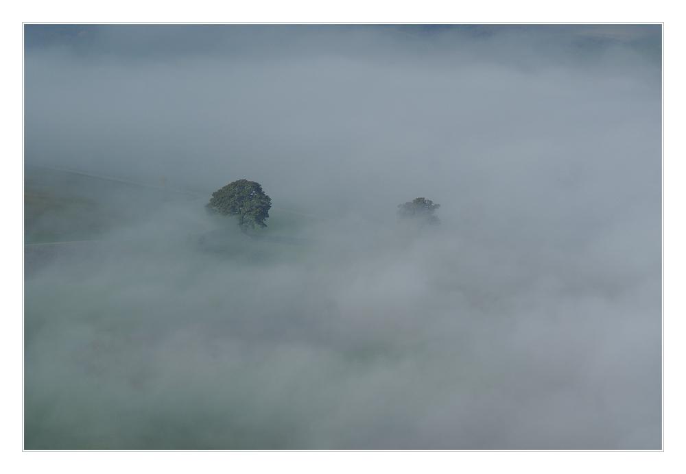 Nebel - Baum
