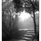 "Nebel bei ""God's Window"""