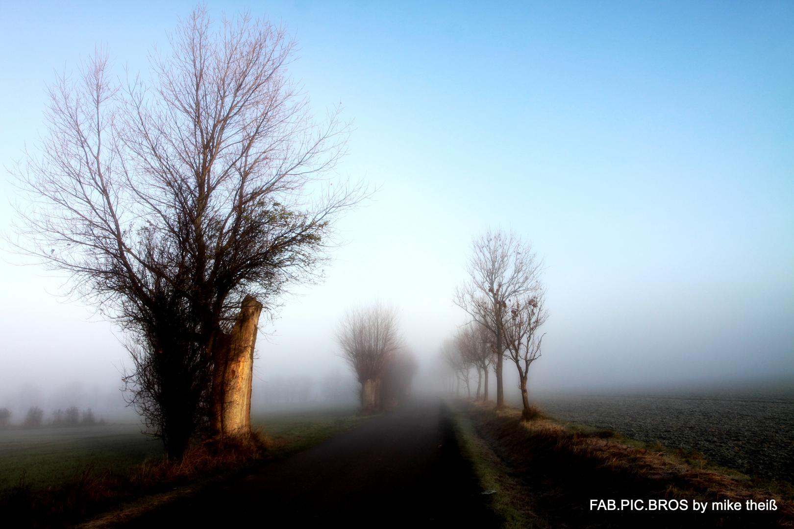 Nebel Bilder