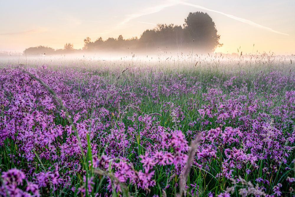 Nebel Blumen