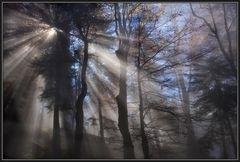 Nebel bricht durch